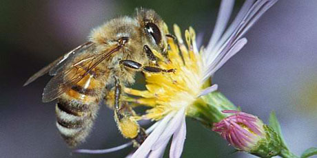 Please Help: 24 Hours to Save the Bees!