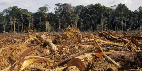 Please Help Stop the Amazon Rainforest Destruction: Only Days Left to Sign Petition!
