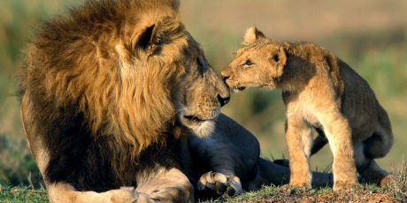Please Help Us Reach 1 Million Petition Signers to Ban the Lion Trade & Save South African Lions!