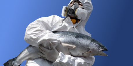 Please Help Stop the Frankenfish Attack. Photo by the Avaaz Team