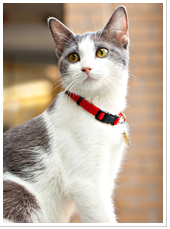 City of Toronto's image: Adopt a Cat During Feline Fiesta